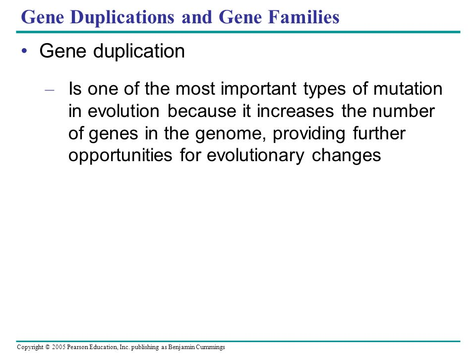 Copyright © 2005 Pearson Education, Inc. publishing as Benjamin Cummings Gene Duplications and Gene Families Gene duplication – Is one of the most imp