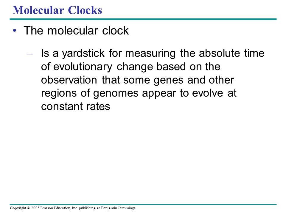 Copyright © 2005 Pearson Education, Inc. publishing as Benjamin Cummings Molecular Clocks The molecular clock – Is a yardstick for measuring the absol