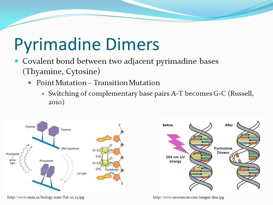 Pyrimadine Dimers Covalent bond between two adjacent pyrimadine bases (Thyamine, Cytosine) Point Mutation – Transition Mutation Switching of complementary base pairs A-T becomes G-C (Russell, 2010) http://www.mun.ca/biology/scarr/F16-20,25.jpghttp://www.uvsciences.com/images/dna.jpg
