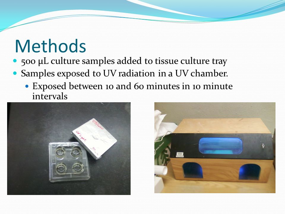 Methods 500 μL culture samples added to tissue culture tray Samples exposed to UV radiation in a UV chamber.