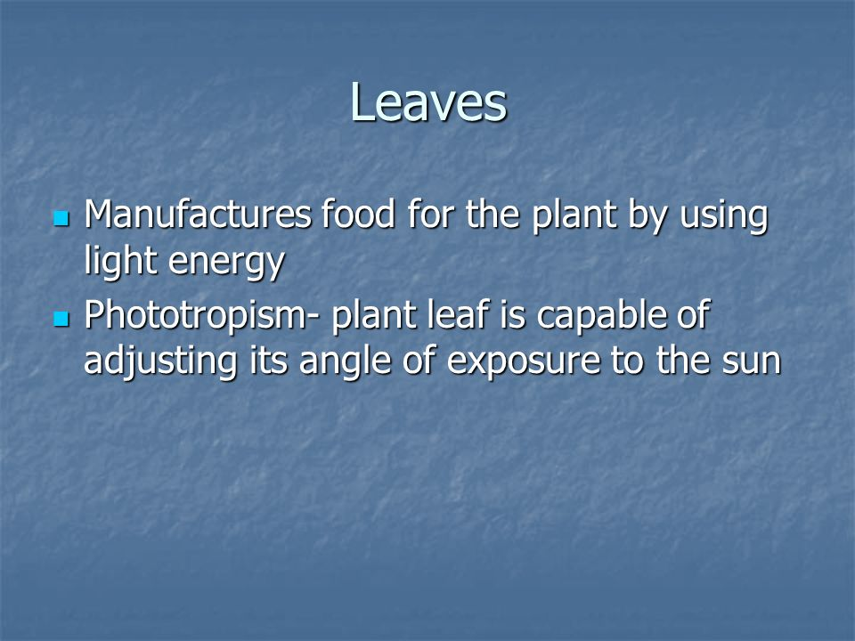 Leaves Manufactures food for the plant by using light energy Manufactures food for the plant by using light energy Phototropism- plant leaf is capable
