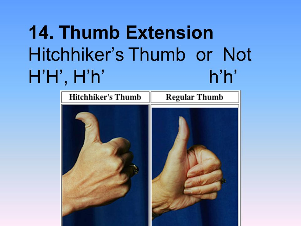14. Thumb Extension Hitchhikers Thumb or Not HH, Hh hh