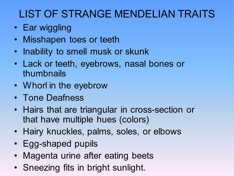 LIST OF STRANGE MENDELIAN TRAITS Ear wiggling Misshapen toes or teeth Inability to smell musk or skunk Lack or teeth, eyebrows, nasal bones or thumbna