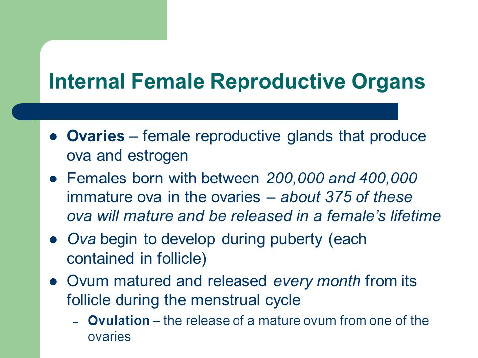 Internal Female Reproductive Organs Ovaries – female reproductive glands that produce ova and estrogen Females born with between 200,000 and 400,000 i