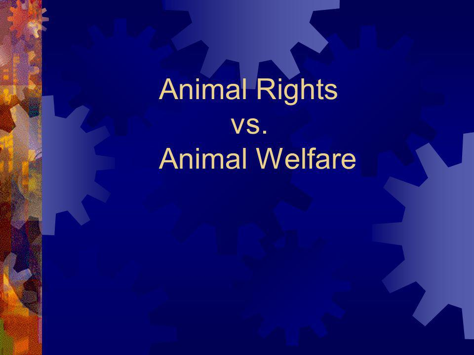 5.Writing Assignment… Should animals be used for food.