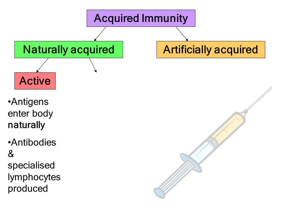 Acquired Immunity Artificially acquiredNaturally acquired Active Antigens enter body naturally Antibodies & specialised lymphocytes produced