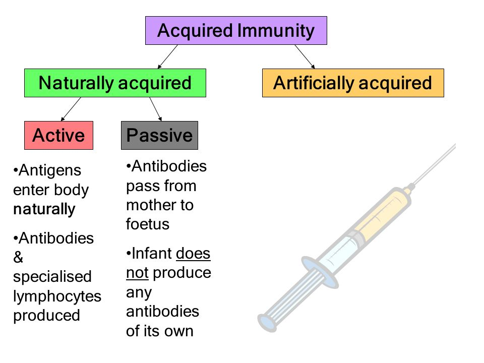Acquired Immunity Artificially acquiredNaturally acquired ActivePassive Antigens enter body naturally Antibodies & specialised lymphocytes produced An