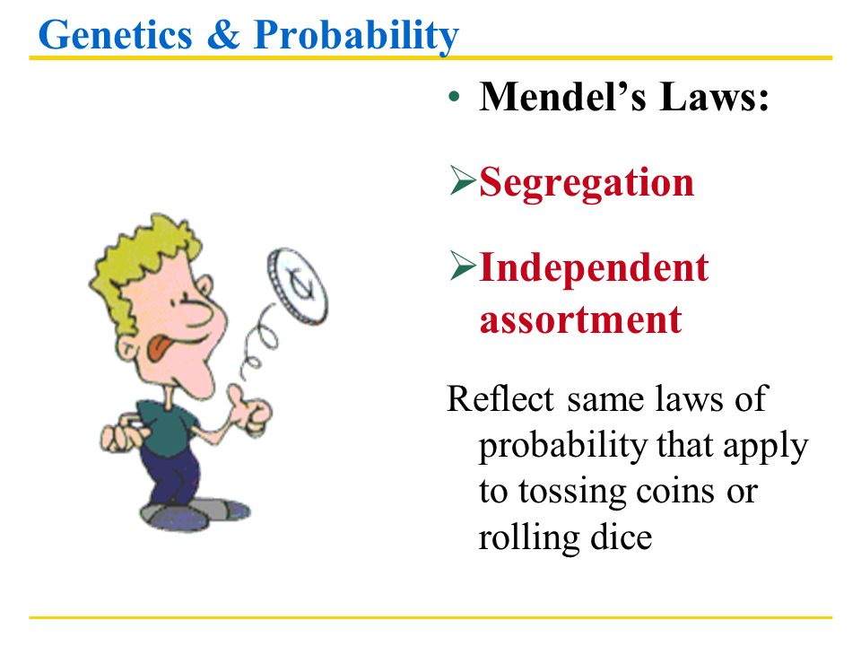 Genetics & Probability Mendels Laws: Segregation Independent assortment Reflect same laws of probability that apply to tossing coins or rolling dice