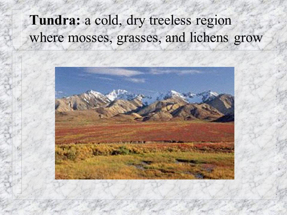 Tundra: a cold, dry treeless region where mosses, grasses, and lichens grow