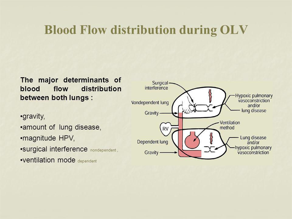 Blood Flow distribution during OLV The major determinants of blood flow distribution between both lungs : gravity, amount of lung disease, magnitude HPV, surgical interference nondependent, ventilation mode dependent