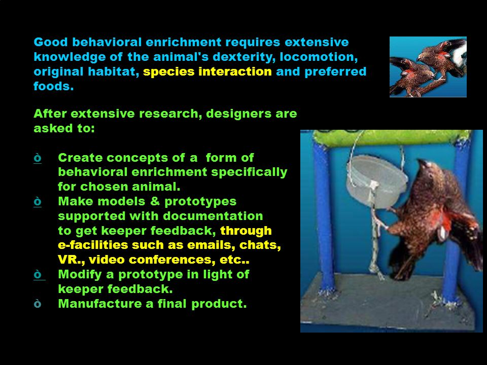 Browse Branches of trees or bushes placed in enclosures for animals to eat Behavioral enrichment Item used to encourage natural behaviour in captive animals Research Investigating to find out facts.