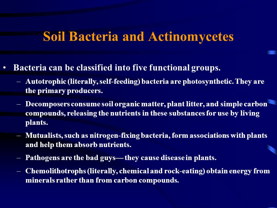 Soil Bacteria and Actinomycetes Bacteria can be classified into five functional groups. –Autotrophic (literally, self-feeding) bacteria are photosynth