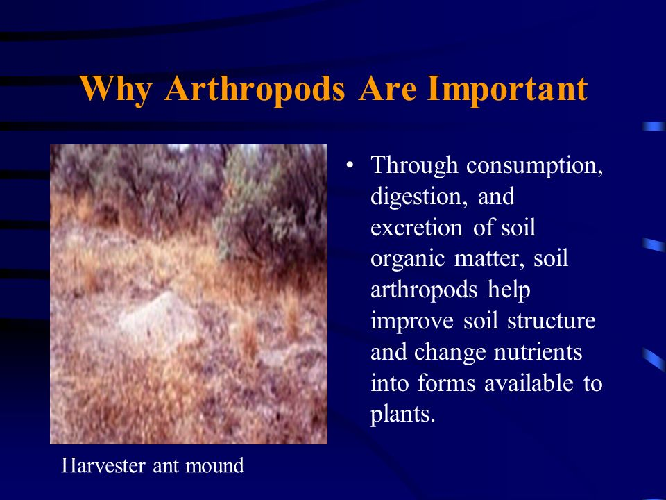 Why Arthropods Are Important Through consumption, digestion, and excretion of soil organic matter, soil arthropods help improve soil structure and cha