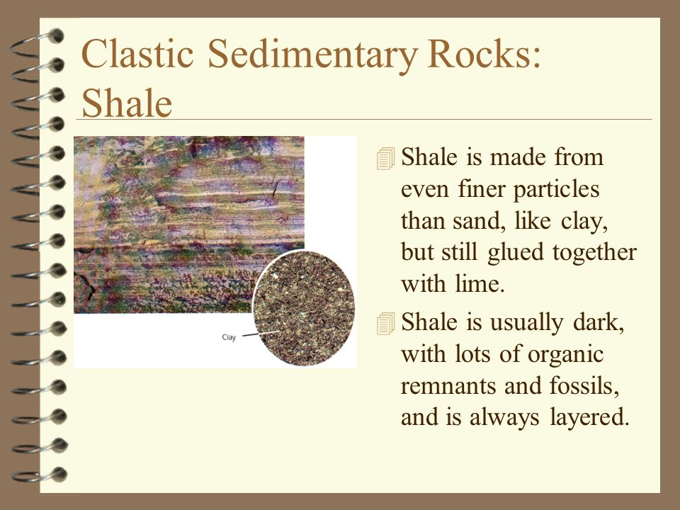 Clastic Sedimentary Rocks: Shale 4 Shale is made from even finer particles than sand, like clay, but still glued together with lime. 4 Shale is usuall