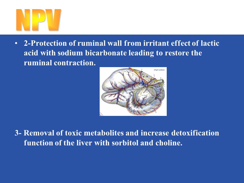 2-Protection of ruminal wall from irritant effect of lactic acid with sodium bicarbonate leading to restore the ruminal contraction.