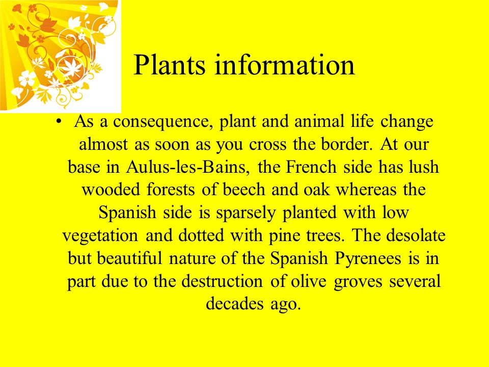 Plants information As a consequence, plant and animal life change almost as soon as you cross the border. At our base in Aulus-les-Bains, the French s