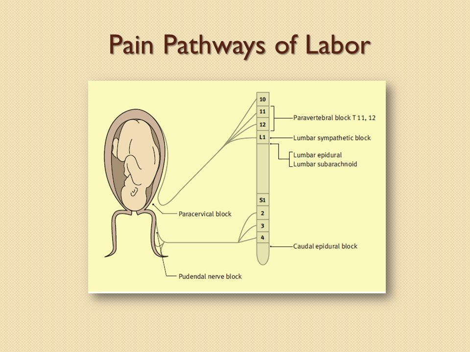 Pain Pathways of Labor