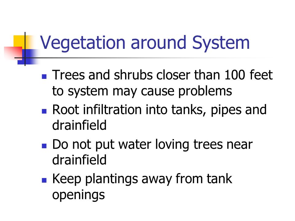 Vegetation around System Trees and shrubs closer than 100 feet to system may cause problems Root infiltration into tanks, pipes and drainfield Do not