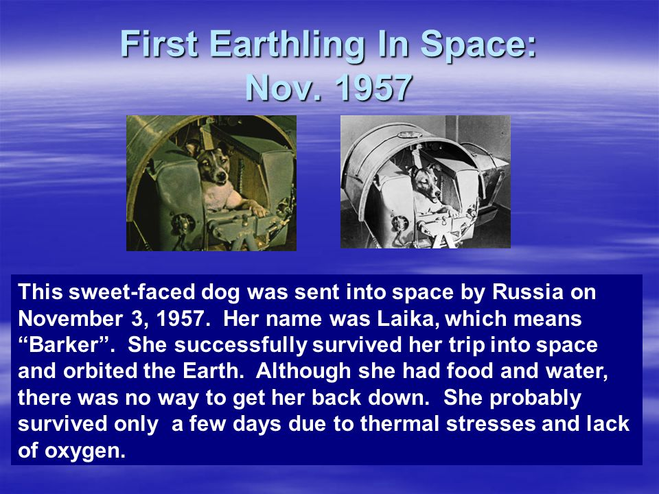 First Earthling In Space: Nov. 1957 This sweet-faced dog was sent into space by Russia on November 3, 1957. Her name was Laika, which means Barker. Sh
