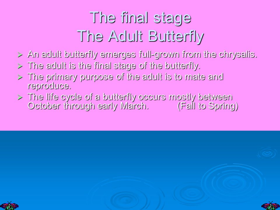 The final stage The Adult Butterfly An adult butterfly emerges full-grown from the chrysalis.