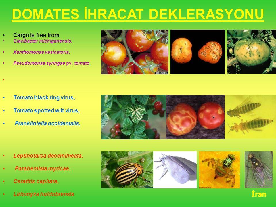 Cargo is free from Clavibacter michiganensis, Xanthomonas vesicatoria, Pseudomonas syringae pv. tomato, Tomato black ring virus, Tomato spotted wilt v