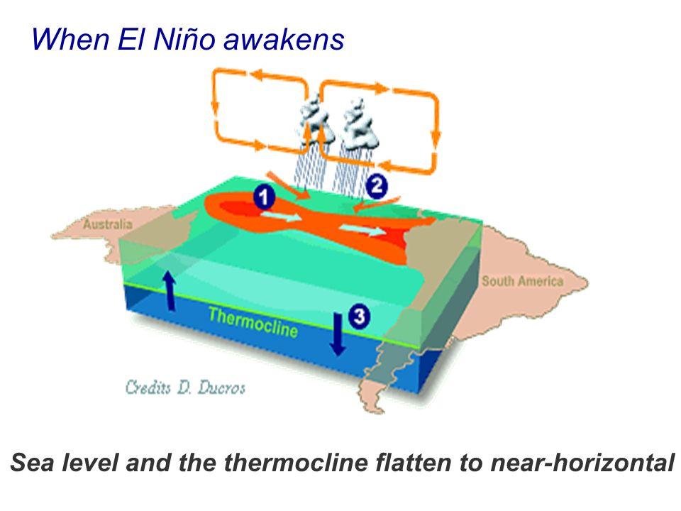When El Niño awakens Sea level and the thermocline flatten to near-horizontal