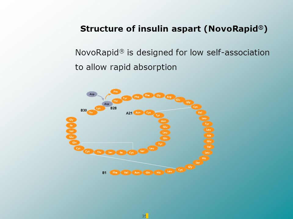 35 Structure of insulin aspart (NovoRapid ® ) NovoRapid ® is designed for low self-association to allow rapid absorption