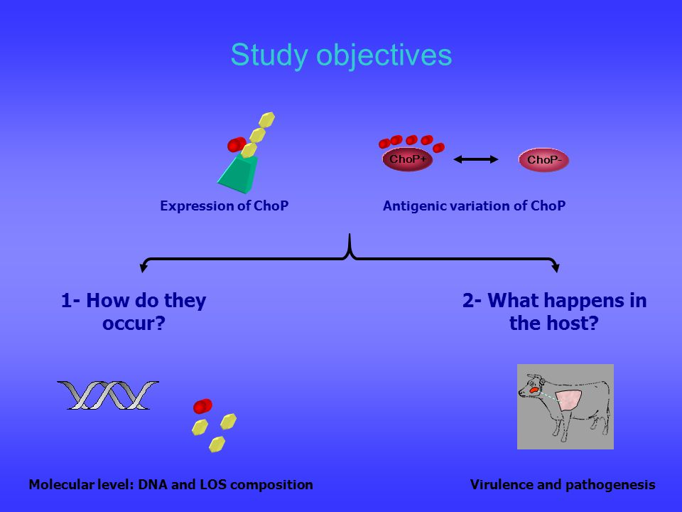 Study objectives 1- How do they occur? ChoP+ ChoP- 2- What happens in the host? Expression of ChoPAntigenic variation of ChoP Molecular level: DNA and