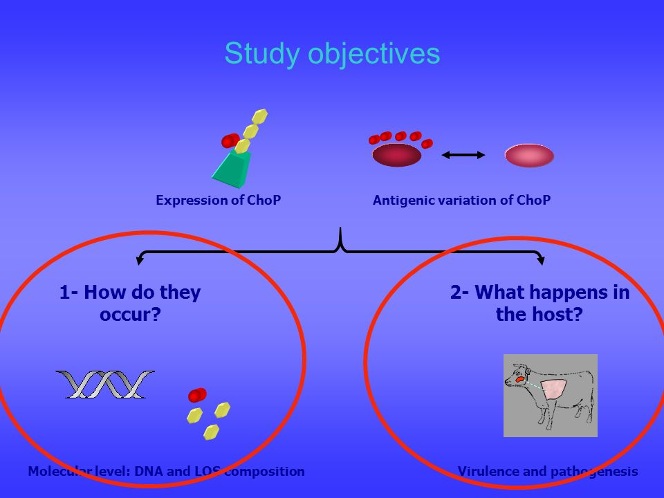 Study objectives 1- How do they occur? 2- What happens in the host? Expression of ChoPAntigenic variation of ChoP Molecular level: DNA and LOS composi