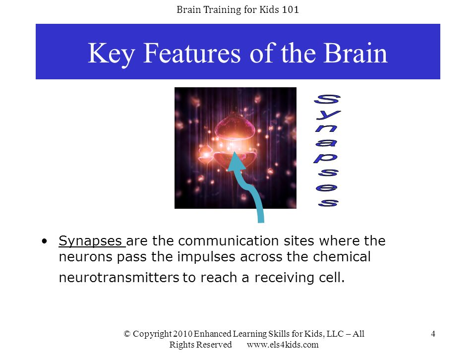 Brain Training for Kids 101 © Copyright 2010 Enhanced Learning Skills for Kids, LLC – All Rights Reserved www.els4kids.com 5 Theory of Neuroplasticity Your brains neurons are always creating new pathways for communication and rearranging/strengthening existing disabilities.