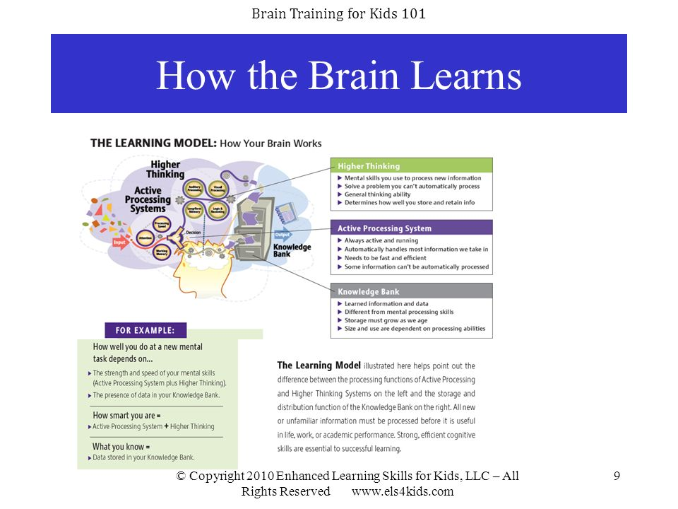 Brain Training for Kids 101 © Copyright 2010 Enhanced Learning Skills for Kids, LLC – All Rights Reserved www.els4kids.com 10 Steps Involved in Learning First, the brain requires attention and memory skills when attempting to receive information.