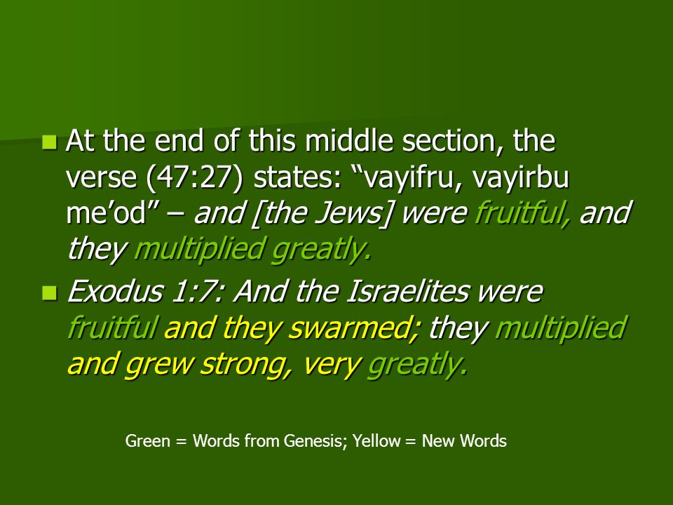 At the end of this middle section, the verse (47:27) states: vayifru, vayirbu meod – and [the Jews] were fruitful, and they multiplied greatly. At the