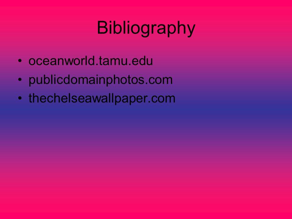 Bibliography oceanworld.tamu.edu publicdomainphotos.com thechelseawallpaper.com