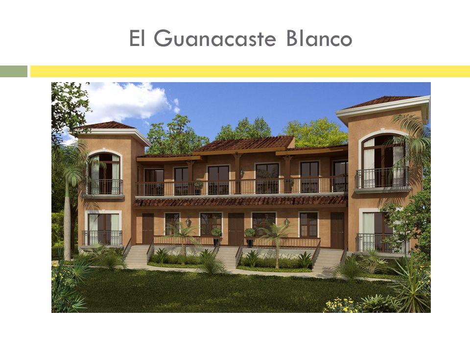 El Guanacaste Blanco