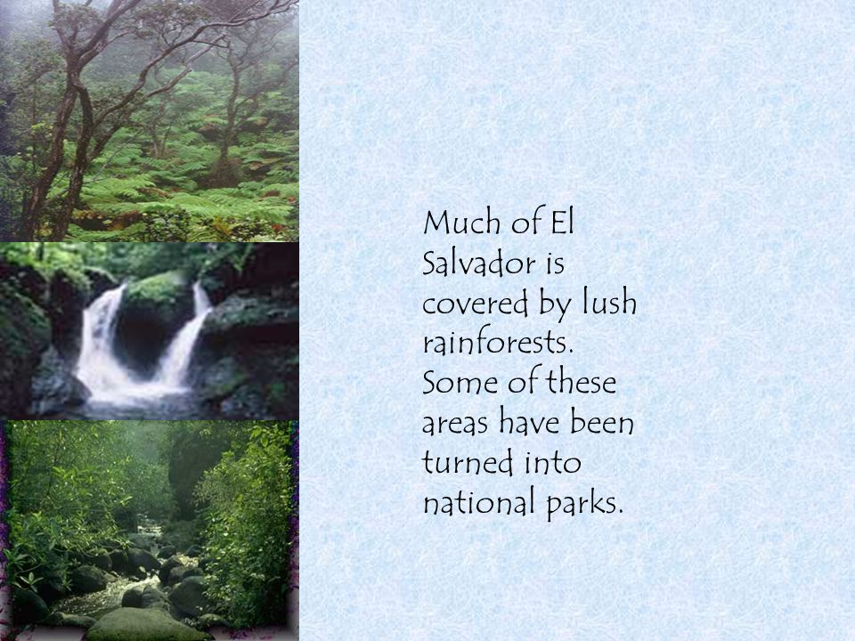 Much of El Salvador is covered by lush rainforests. Some of these areas have been turned into national parks.