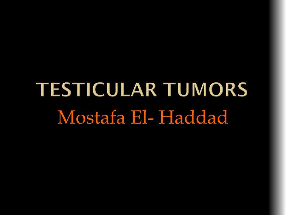 Mostafa El- Haddad