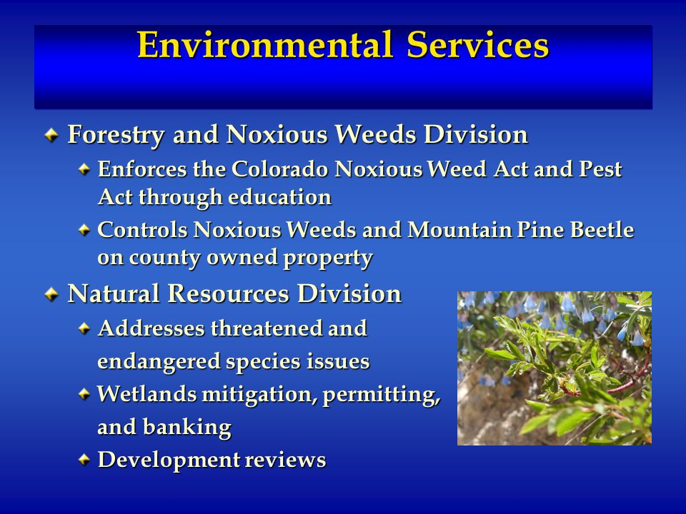 Environmental Services Forestry and Noxious Weeds Division Enforces the Colorado Noxious Weed Act and Pest Act through education Controls Noxious Weeds and Mountain Pine Beetle on county owned property Natural Resources Division Addresses threatened and endangered species issues Wetlands mitigation, permitting, and banking Development reviews