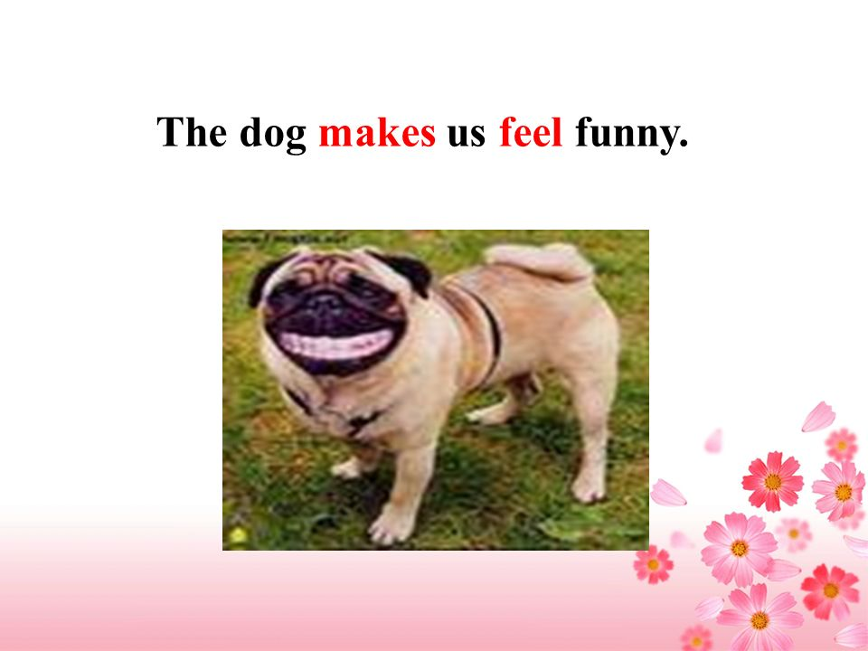 The dog makes us feel funny.