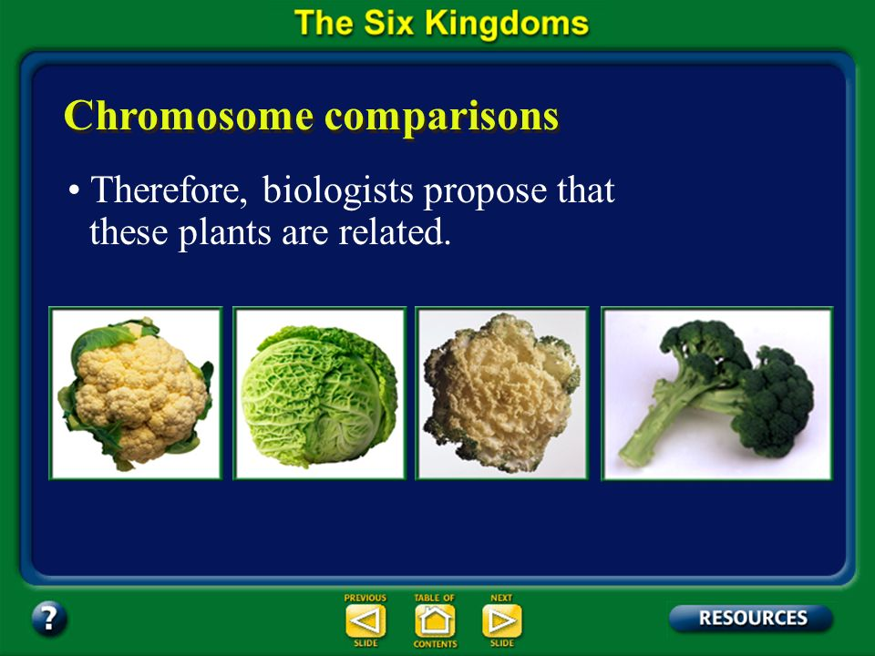 Section 17.2 Summary – pages 450-459 Chromosome comparisons For example, cauliflower, cabbage, kale, and broccoli look different but have chromosomes