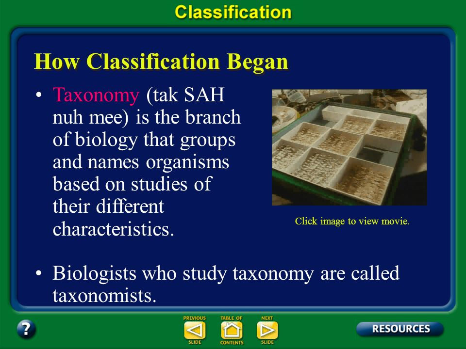 Chapter Summary – 17.1 Classification provides an orderly framework in which to study the relationships among living and extinct species.