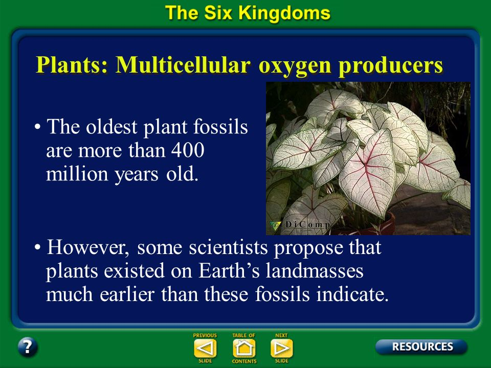 Section 17.2 Summary – pages 450-459 Plants: Multicellular oxygen producers A plants cells usually contain chloroplasts and have cell walls composed o