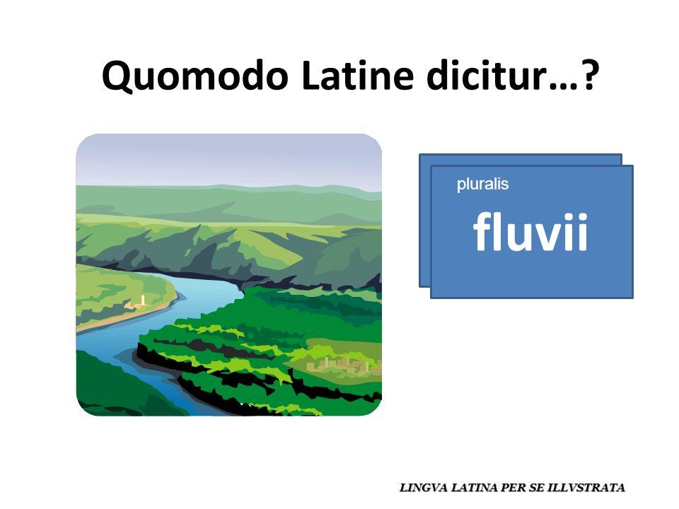 Quomodo Latine dicitur… LINGVA LATINA PER SE ILLVSTRATA fluvius fluvii pluralis