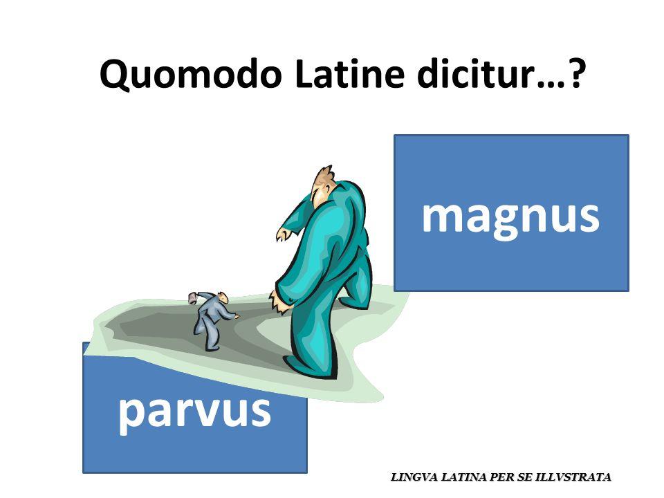 Quomodo Latine dicitur… LINGVA LATINA PER SE ILLVSTRATA parvus magnus