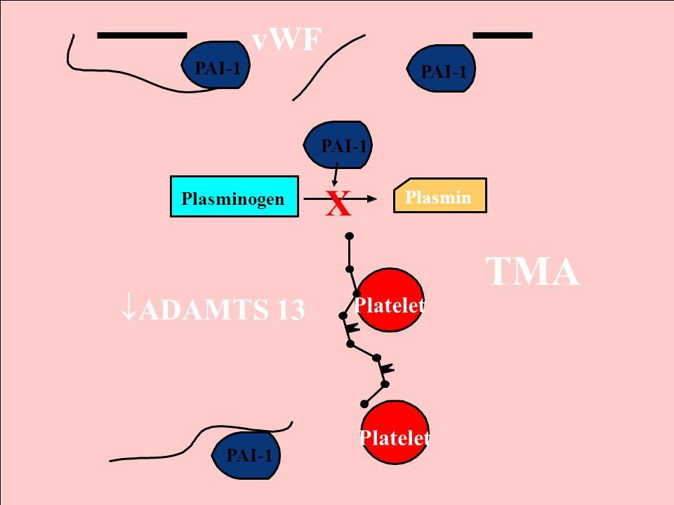 14 Plasmin Plasminogen PAI-1 X TMA vWF Platelet ADAMTS 13