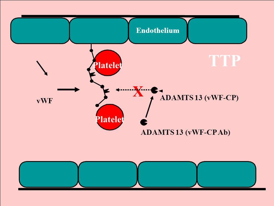 16 Endothelium Platelet vWF X ADAMTS 13 (vWF-CP) ADAMTS 13 (vWF-CP Ab) TTP