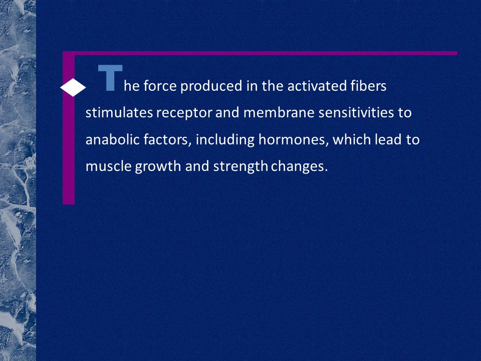 T he force produced in the activated fibers stimulates receptor and membrane sensitivities to anabolic factors, including hormones, which lead to musc