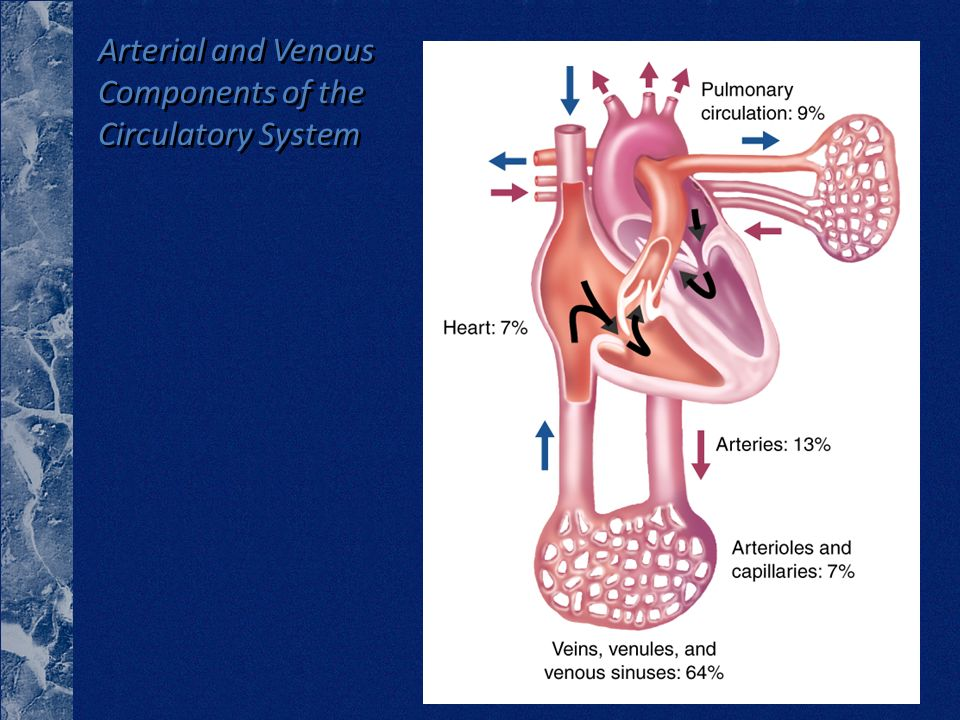 Arterial and Venous Components of the Circulatory System