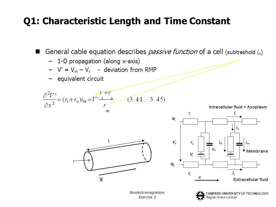 TAMPERE UNIVERSITY OF TECHNOLOGY Ragnar Granit Institute Bioelectromagnetism Exercise 2 Q1: Characteristic Length and Time Constant General cable equation describes passive function of a cell (subtreshold i m ) –1-D propagation (along x-axis) –V = V m – V r - deviation from RMP –equivalent circuit l r x