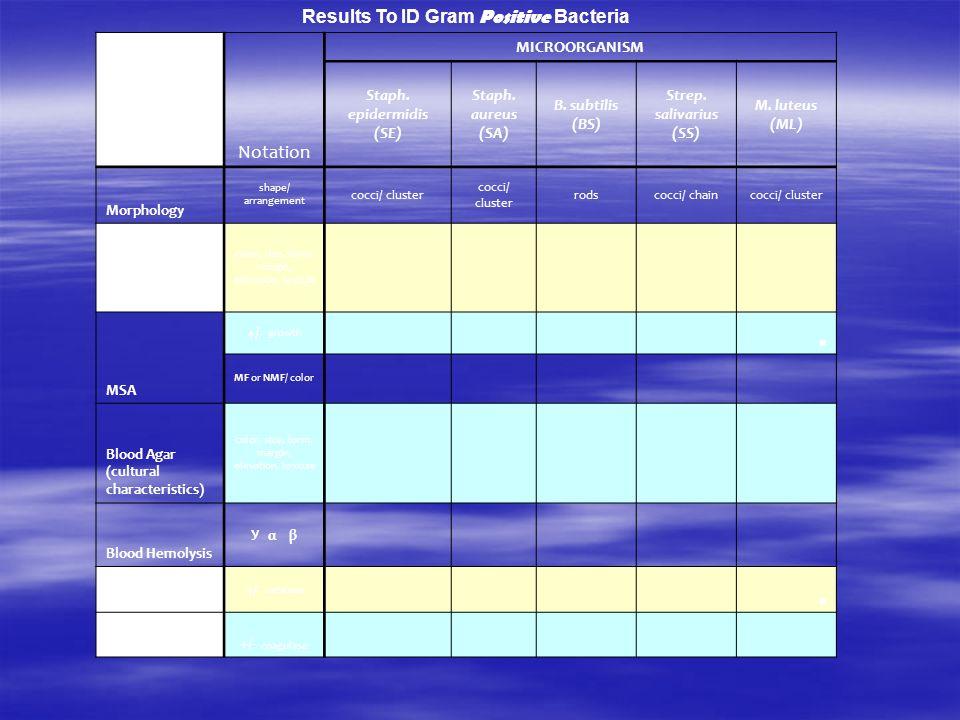Results To ID Gram Positive Bacteria Notation MICROORGANISM Staph. epidermidis (SE) Staph. aureus (SA) B. subtilis (BS) Strep. salivarius (SS) M. lute