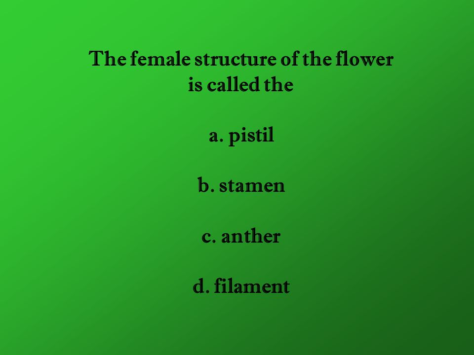 The female structure of the flower is called the a. pistil b. stamen c. anther d. filament